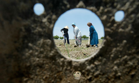 Uzbeks work in fields outside Tashkent, Uzbekistan, which has been criticised for 'subjecting its citizens to forced labour'. Photograph: Denis Sinyakov/AFP/Getty Images
